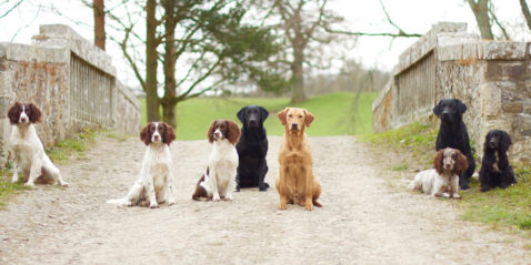 Sealpin Gundogs at Riddell Estate